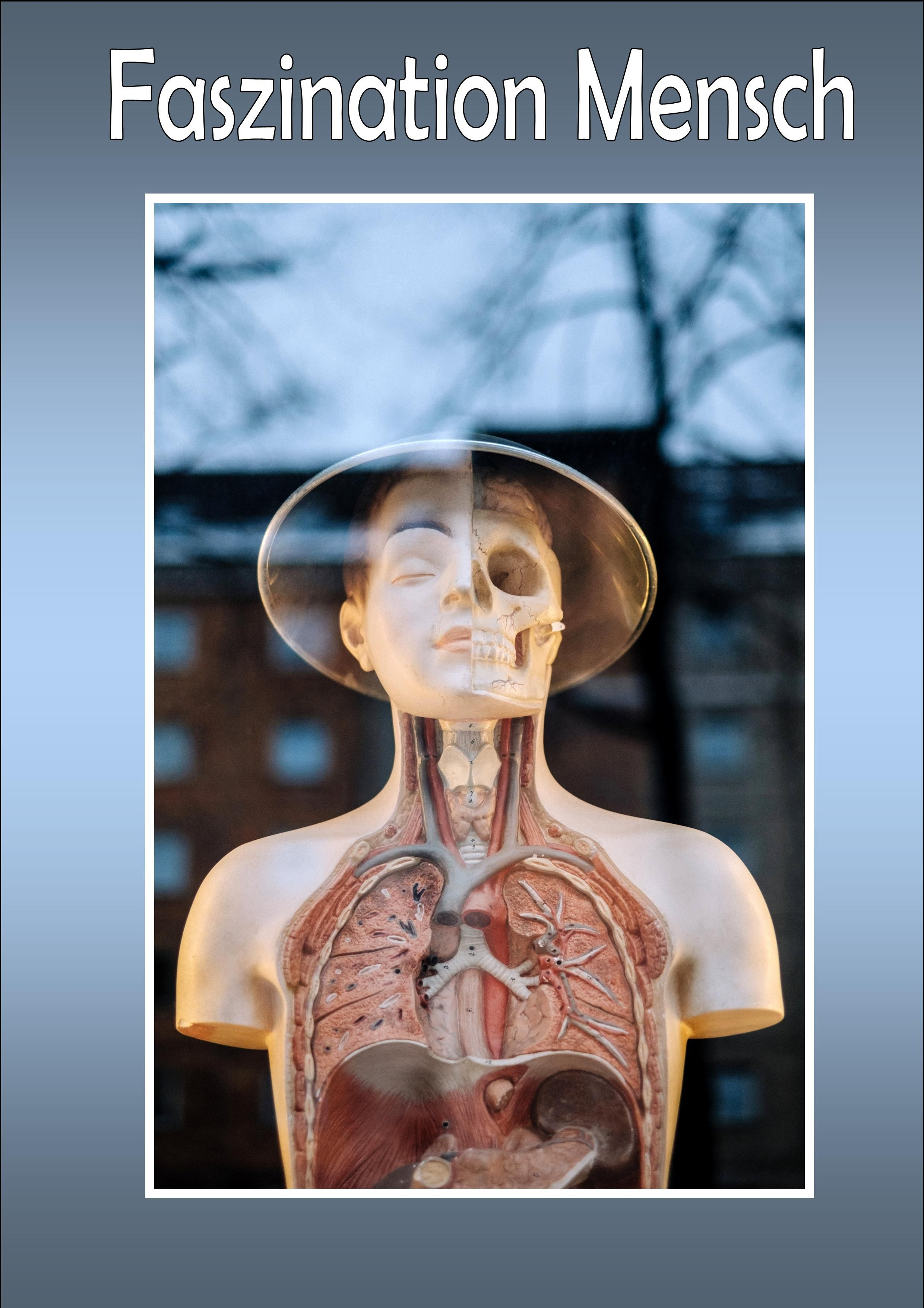 Wie funktioniert der menschliche Körper. Erfahre alles über ...