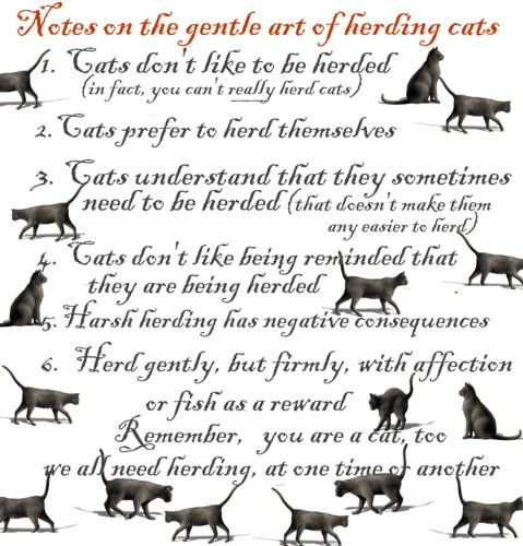 A Year In The Life Herding Cats Herding Cats Warrior Cats Books Warrior Cats