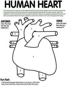 human heart coloring page # 2