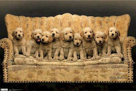 Pin On Dogs I Like