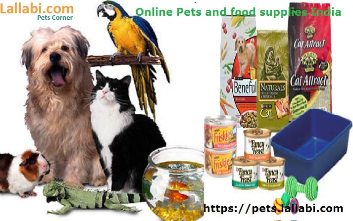Are You Looking For Pets Then Choose Or Post For Favorite Pet Online India Bangalore Kerala Chennai Hyderabad Dogs Puppy Dogs Pet Corner Cow Cat