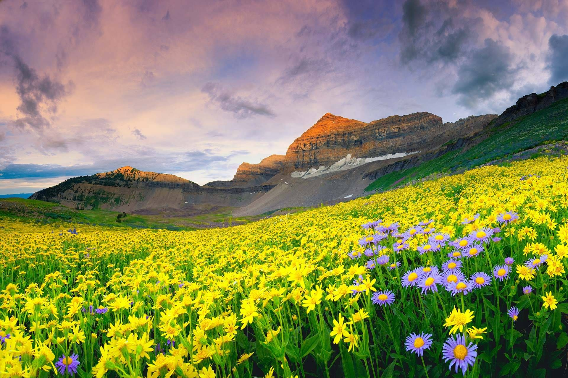 Pin By Judith Cameron On Beautiful Nature Valley Of Flowers Best Nature Images Colorful Places