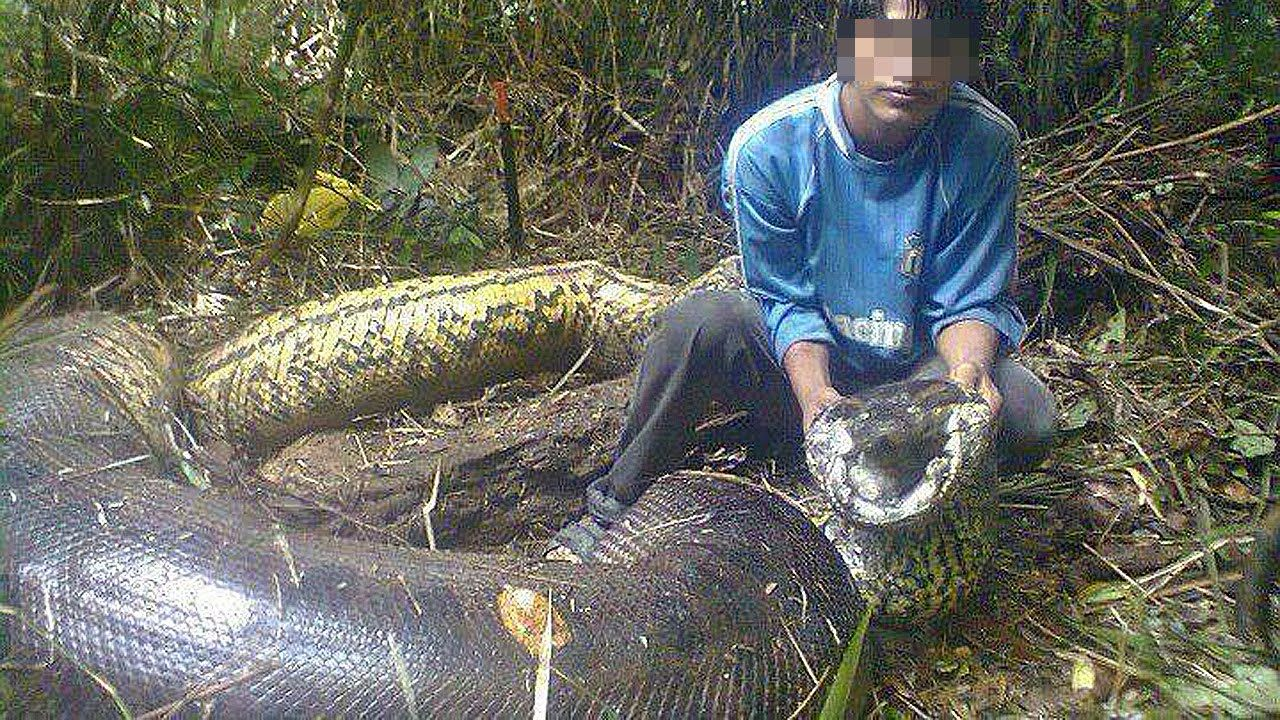 5 Biggest Snakes In The World Giant animals, World