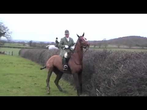 Ledbury Hedge Jumping Balls To The Wall The Hunt Master Is A Boss