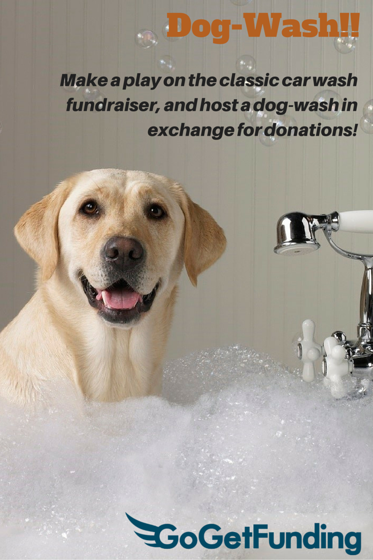 Dog wash make a play on the classic car wash fundraiser and host make a play on the classic car wash fundraiser and host a dog wash in exchange for donations fundraising animalshelters dogwash solutioingenieria Gallery