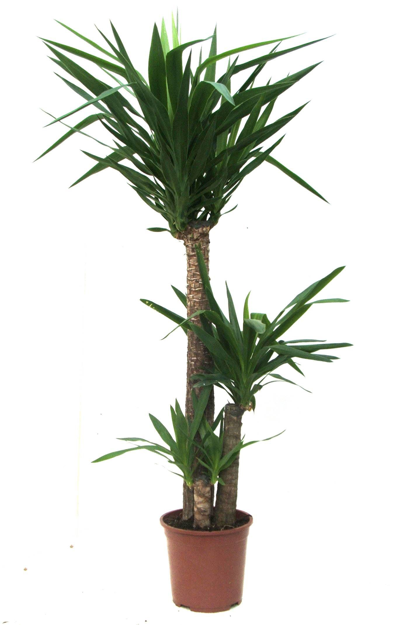 palm plants - Tropical House Plants