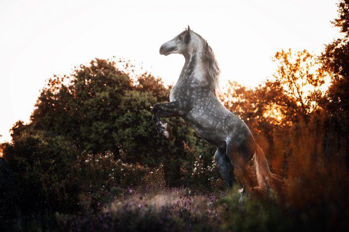Fotos Pferde In Der Natur I In 2020 Pferdeliebe Pferde Ausgestopftes Tier