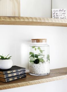 jardins aquatiques d int rieur simples sakarton deco d coration plantes int rieur plante. Black Bedroom Furniture Sets. Home Design Ideas