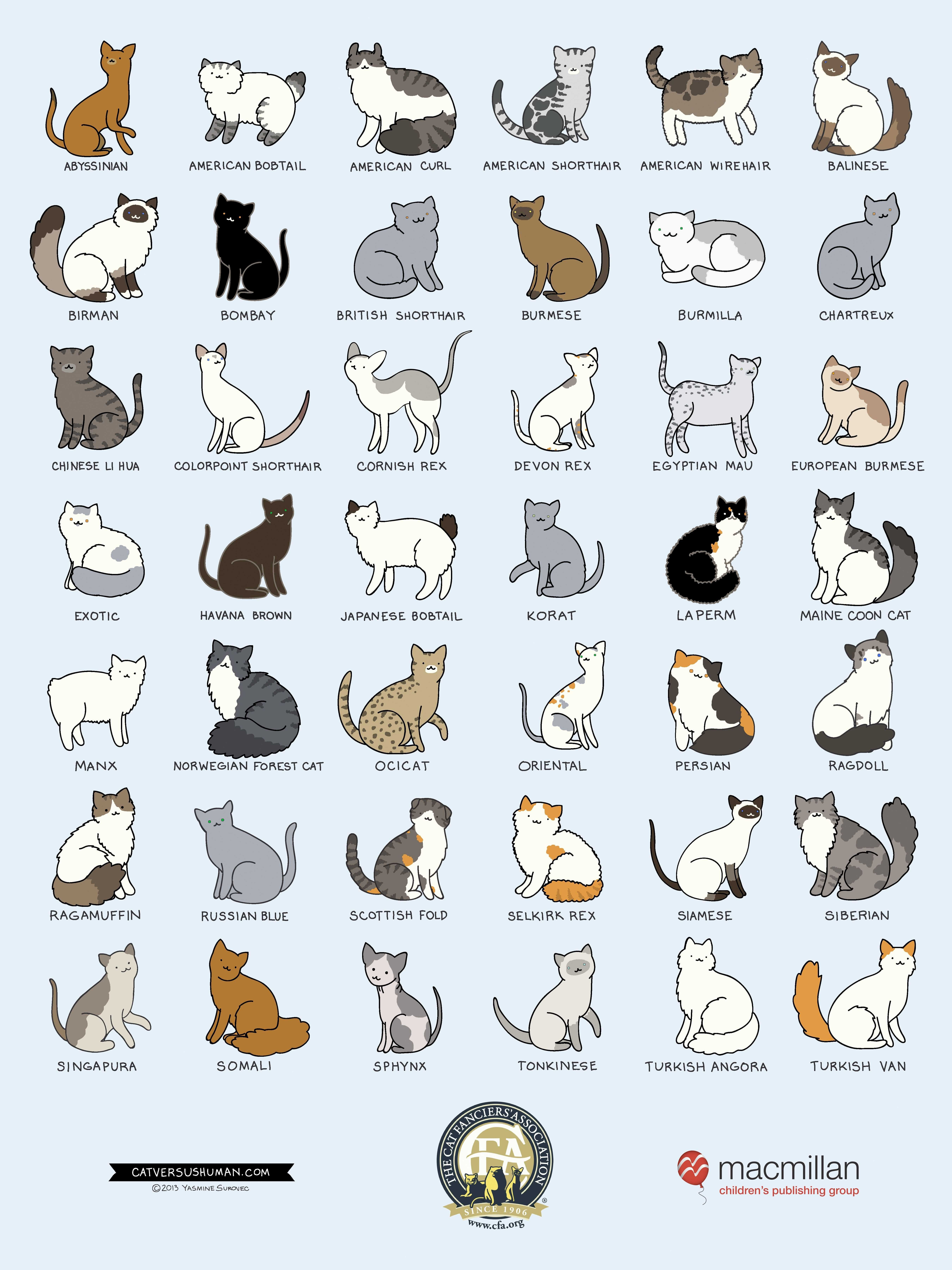 breedposter cat breeds hd of smart related siamese | Diawall ...