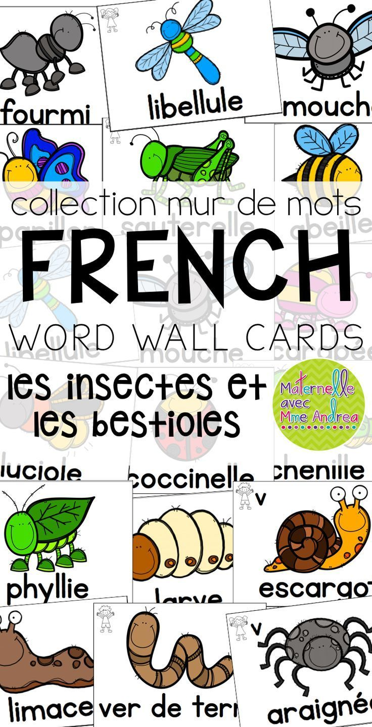 Collection Mur De Mots French Bugs Insects Word Wall Cards