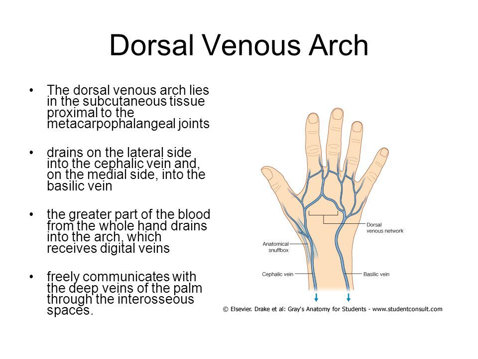 Dorsal Venous Arch Of Hand Md Stuff Pinterest Hands And Arch