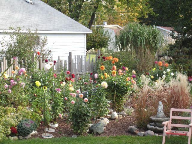 Dahlia landscaping | Beautiful gardens, Landscape, Dahlia