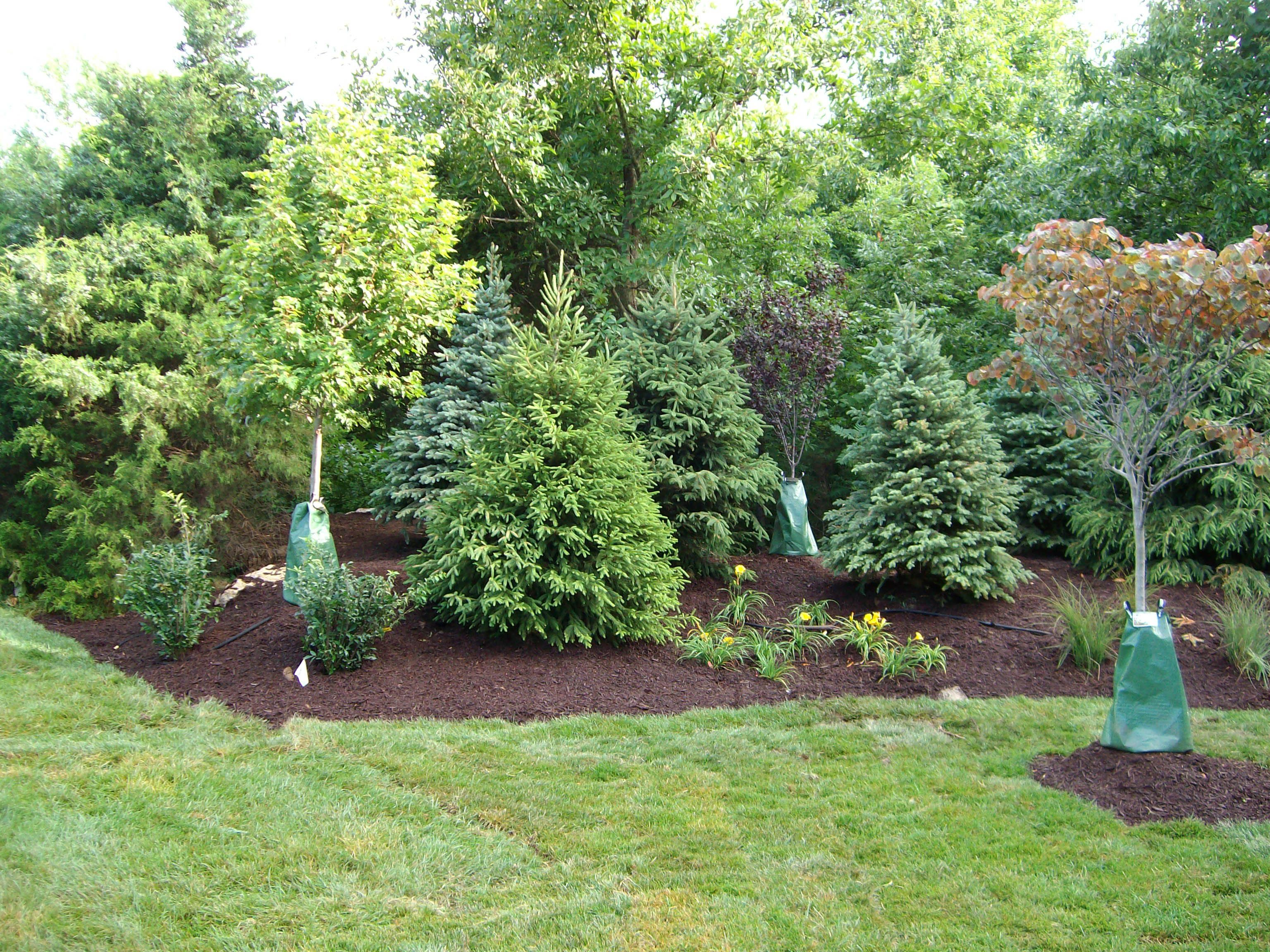 Image gallery landscaping trees for Garden design with grass trees