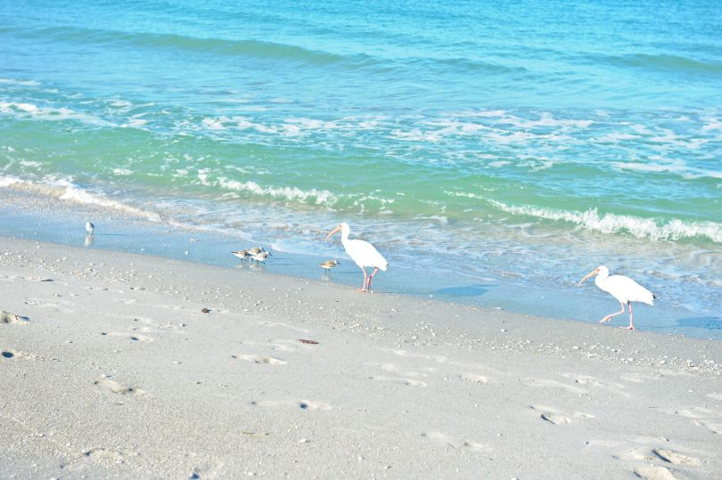 Captiva Island   Captiva Island, Florida