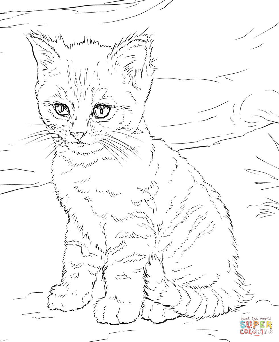 Cute Kitten Coloring Page Png 981 1203 Kitten Coloring Book Puppy Coloring Pages Cat Coloring Book