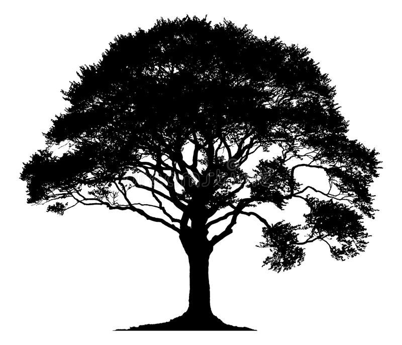 Silhouette Of A Lone Tree Isolated On White Background Aff Tree Lone Silhouette Background Wh Oak Tree Silhouette Tree Silhouette Oak Tree Tattoo