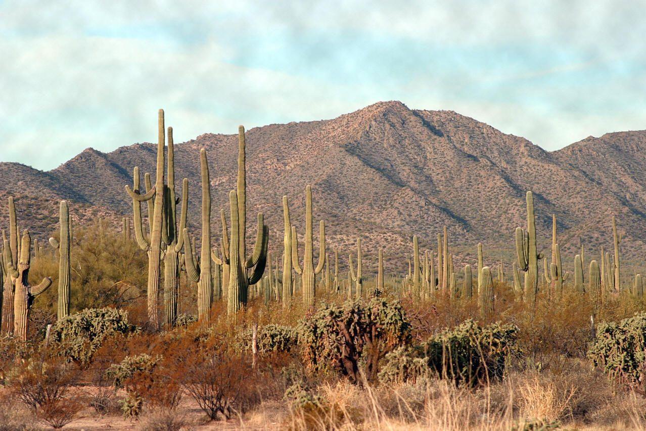 Resultado de imagen para mexico desert