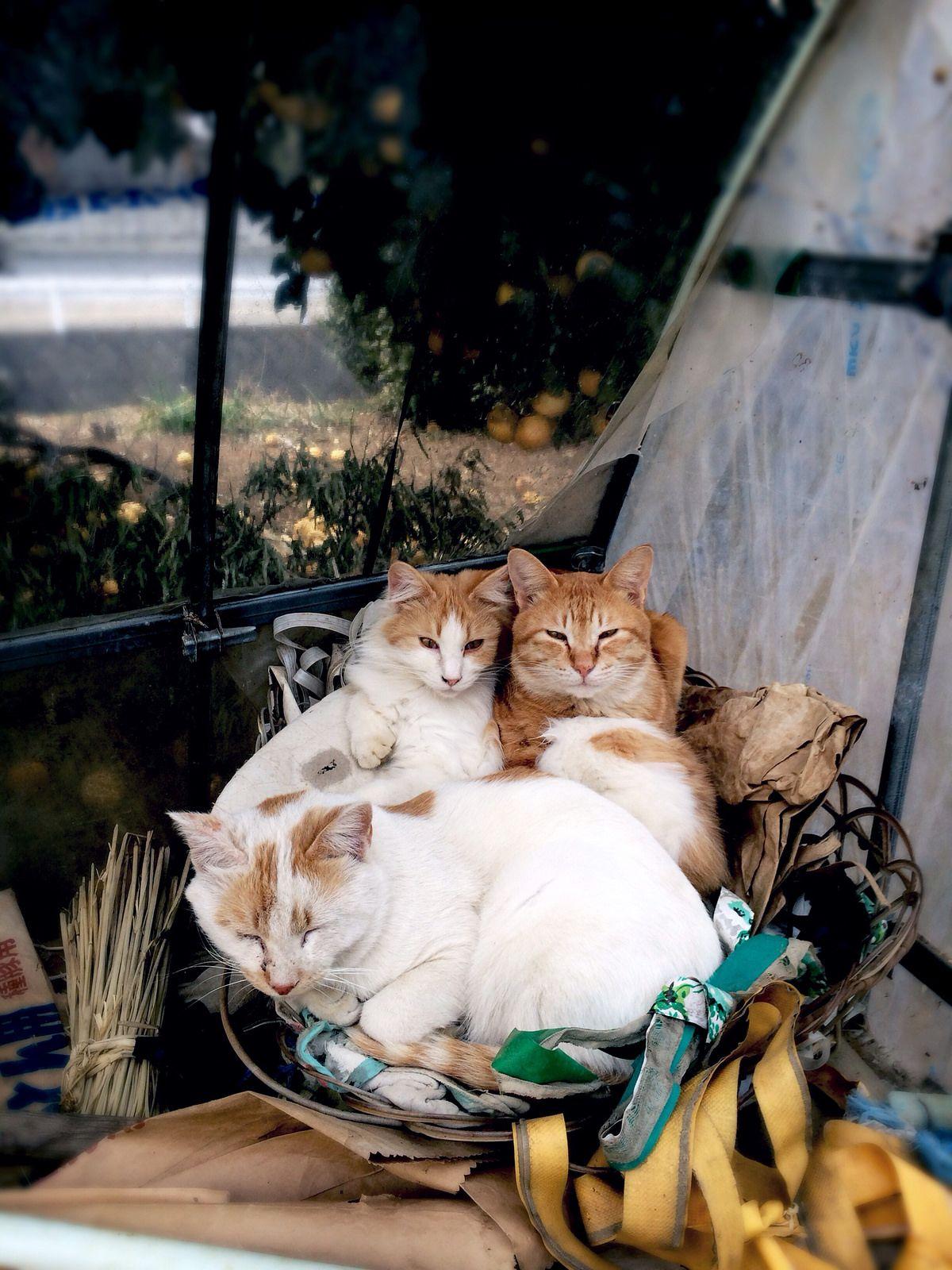 茶白盛り Cute animals, I love cats, Cats