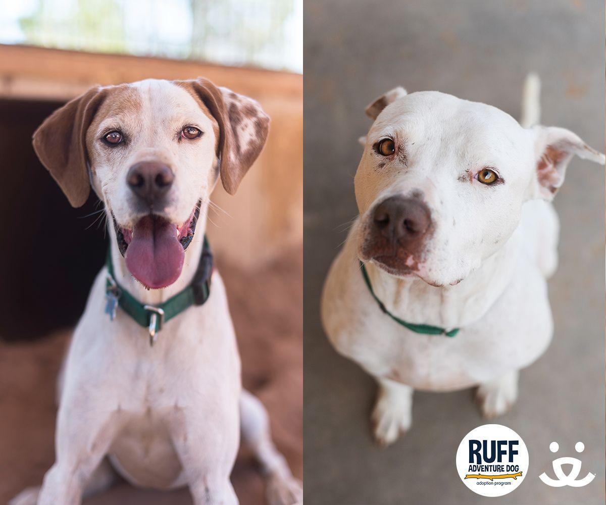 Adoption Promotions Dog activities, Dog adventure, Dog gear