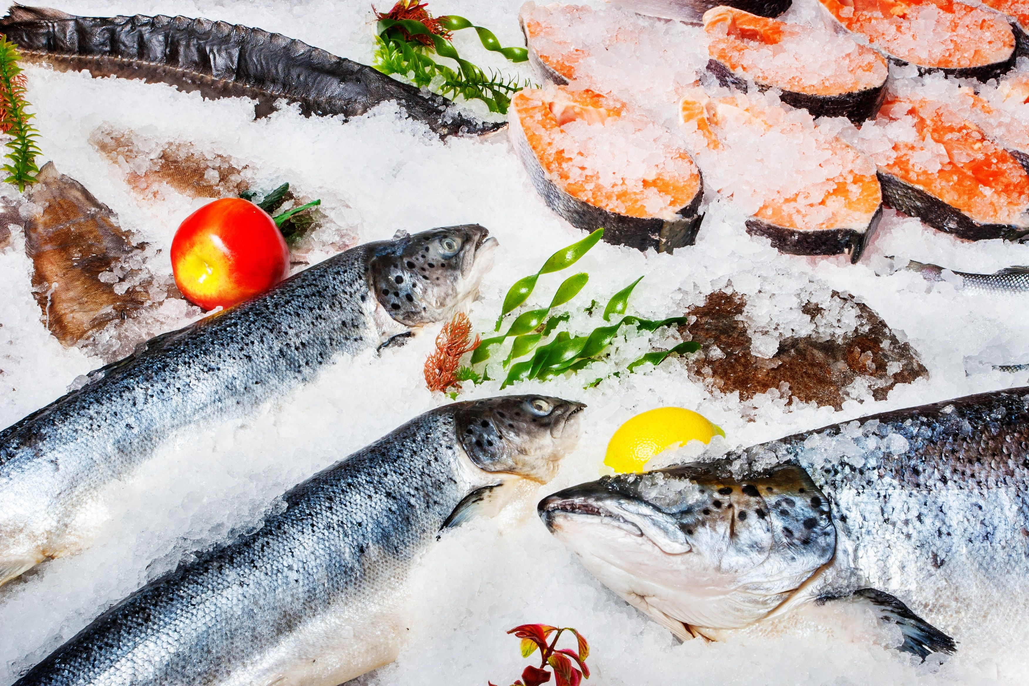 Fresh Fish Online Fresh Fish Fish Healthiest Seafood