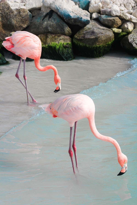 A incontornvel Praia dos Flamingos em Aruba