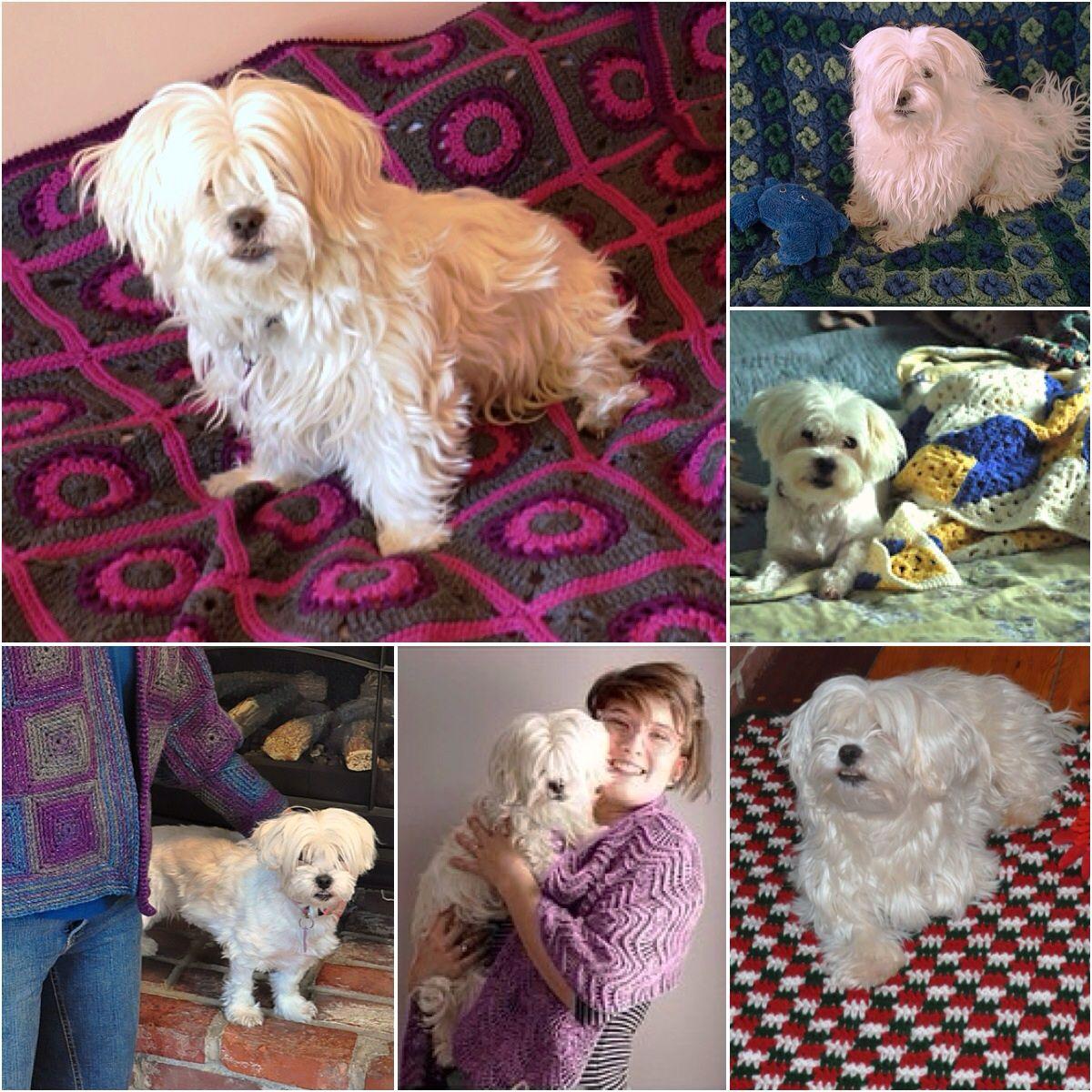 Mika mainly crochet model, dog, & mascot Likes