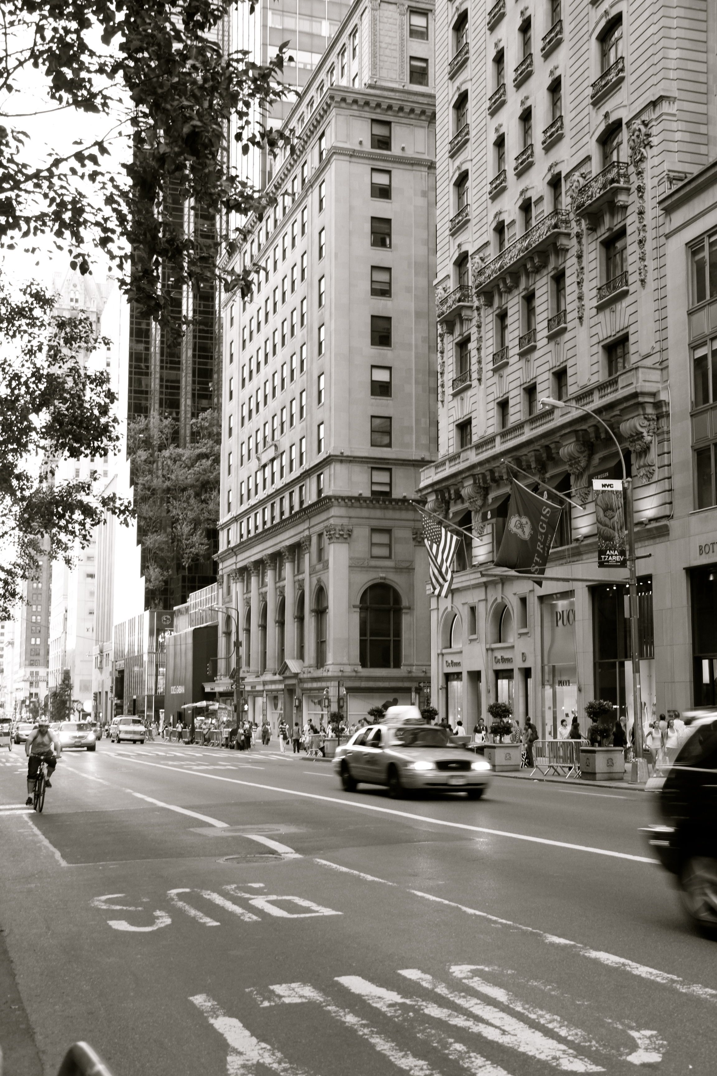 New York City Fifth Avenue See