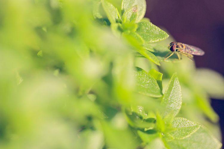 Kleine Fliegen In Blumenerde Bekampfen Diese Tipps Helfen Dekorationen Ideen Fliegen In Blumenerde Kleine Fliegen In Blumenerde Basilikum Pflanzen