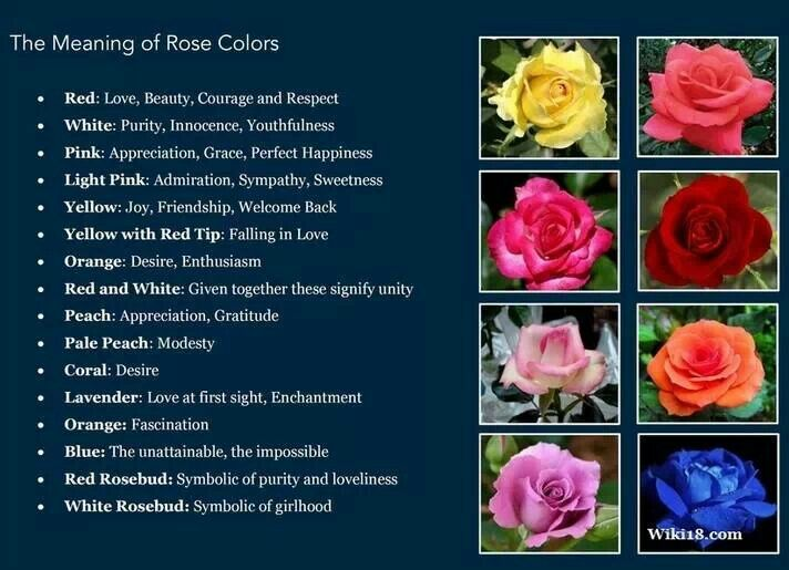 Meaning behind rose colors good to know pinterest for Meaning of flower colors