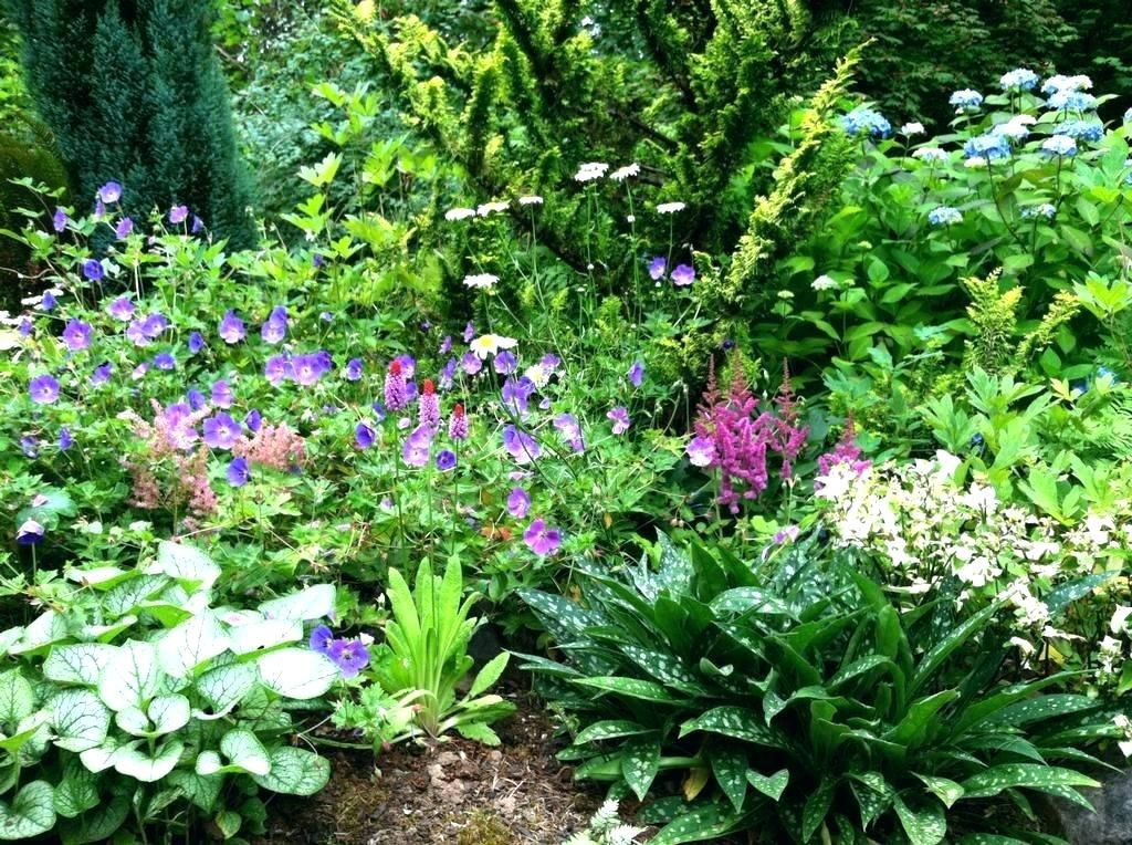 Flower Bed Ideas For Shade Perennial Garden Design Nice