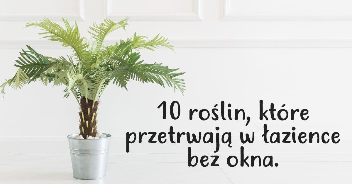 10 Roslin Ktore Przetrwaja W Lazience Bez Dostepu Swiatla Slonecznego Little Garden Growing Plants My Secret Garden