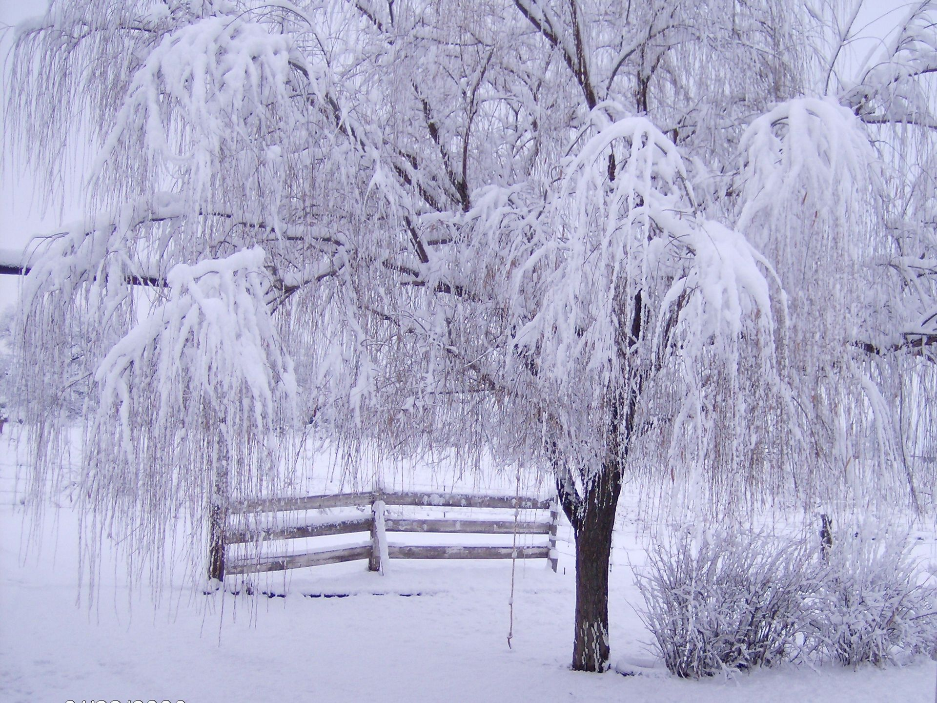 winter pics free download winter scene wallpaper download the free cold with