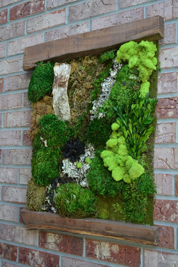 Living Moss Wall Art Moss Wall Art Moss Wall Moss Garden