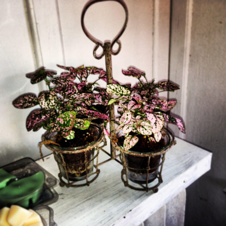 Flower pot traveling pack | Flower pots, Planter pots, Pot