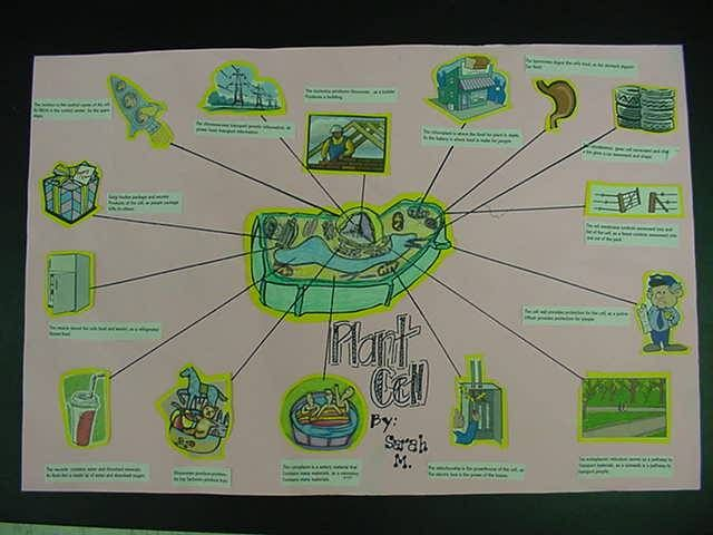 Mr Mohns Biology Home Turf Cell Analogies Collage Project – Cell Analogy Worksheet