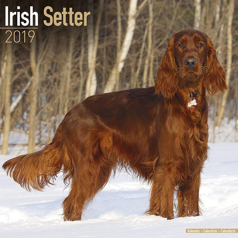 Hundekalender 2019 Irish Setter Hundekalender 2019 by