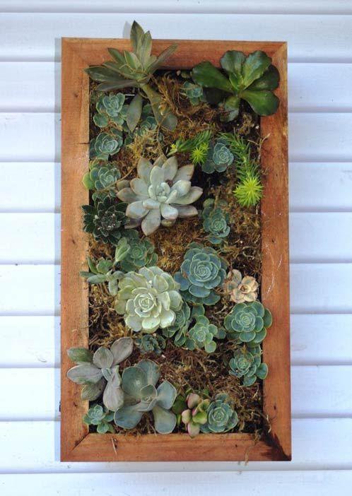 vertical succulents - seaside garden