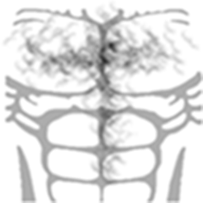 Chest Hair Png T Shirt Roblox Musculos Png Download Transparent Png Image T Shirt Png Hair Png Roblox