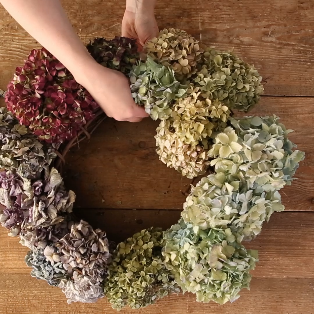 We know hydrangeas don't bloom for long, but now you can enjoy the bright colors and unique shape of hydrangeas all year! We'll show you how to cut and dry hydrangeas while they're in season, and then how to use the dried blooms to decorate an inexpensive grapevine wreath form. This DIY front door wreath is easy to make and can be displayed for years to come. #hydrangea #wreath #driedflowers #frontdoor #curbappeal #diy #bhg