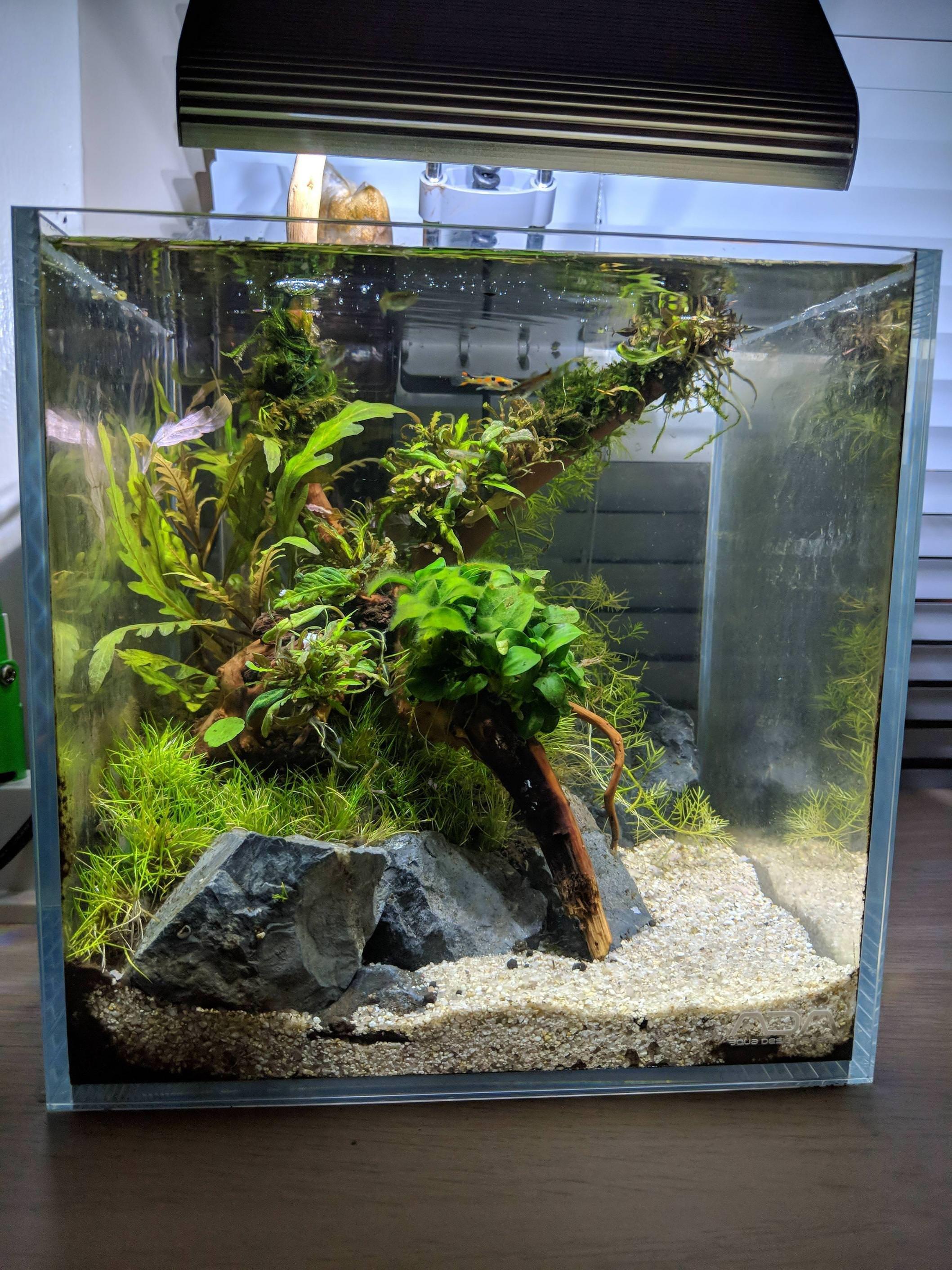 Imgur Fresh Water Fish Tank Aquarium Landscape Aquarium Fish Tank