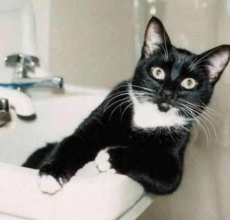 Lustige Katzen Bilder Kostenlos Lustige Bilder Mit Spruche Lustige Katzen Katzen Bilder Katzen