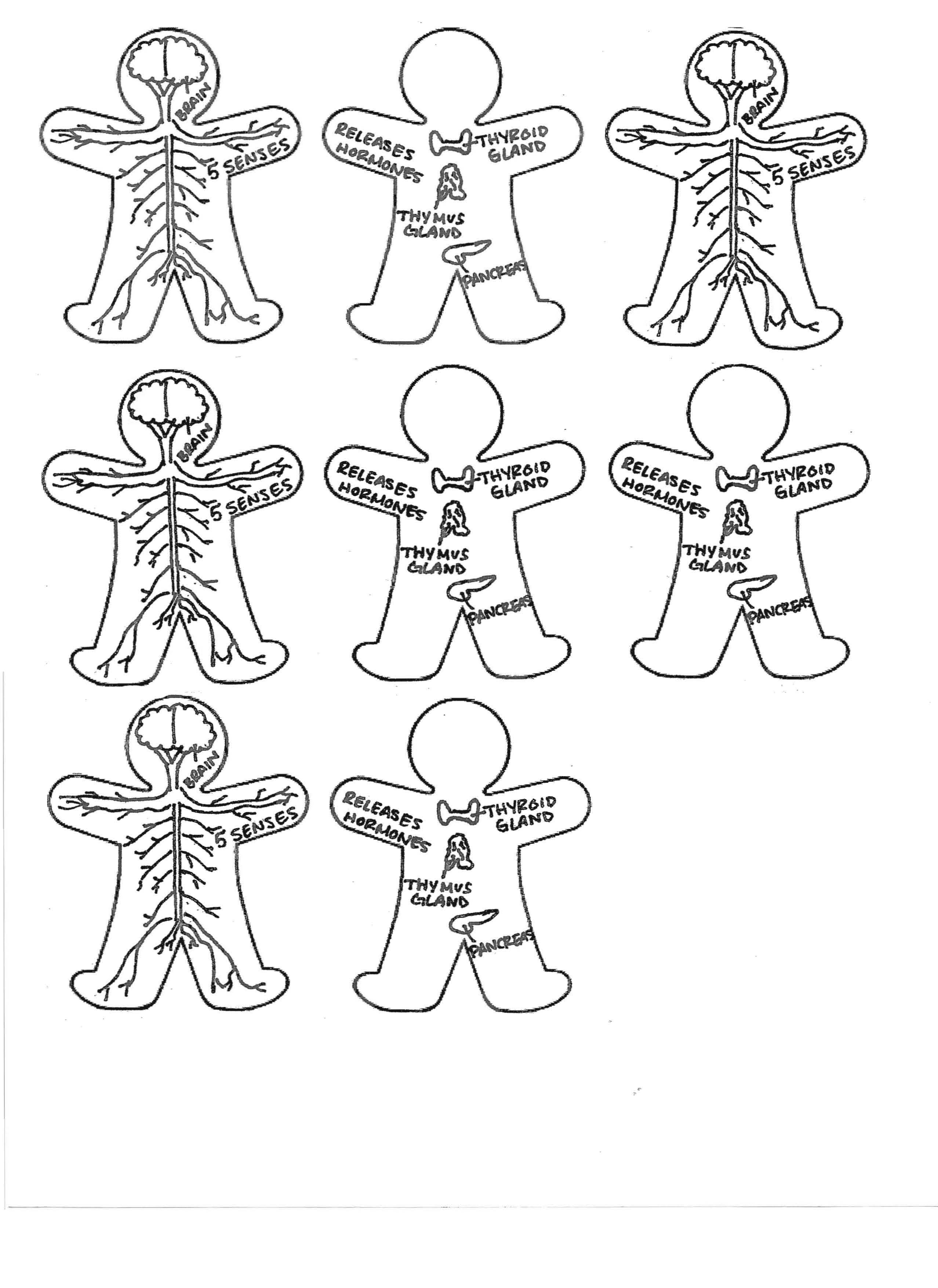 Page 1 Of 2 Grade 6 8 Life Science Anatomy Human Body Organ Systems Foldable This Is The Last Repeated