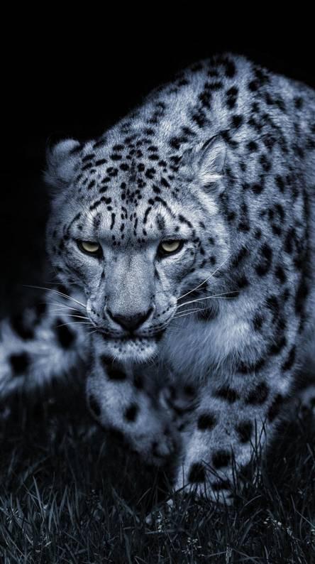 12 Snow Leopard Wallpaper Iphone Pics Allwallpaper Snow Leopard Wallpaper Leopard Wallpaper Snow Leopard