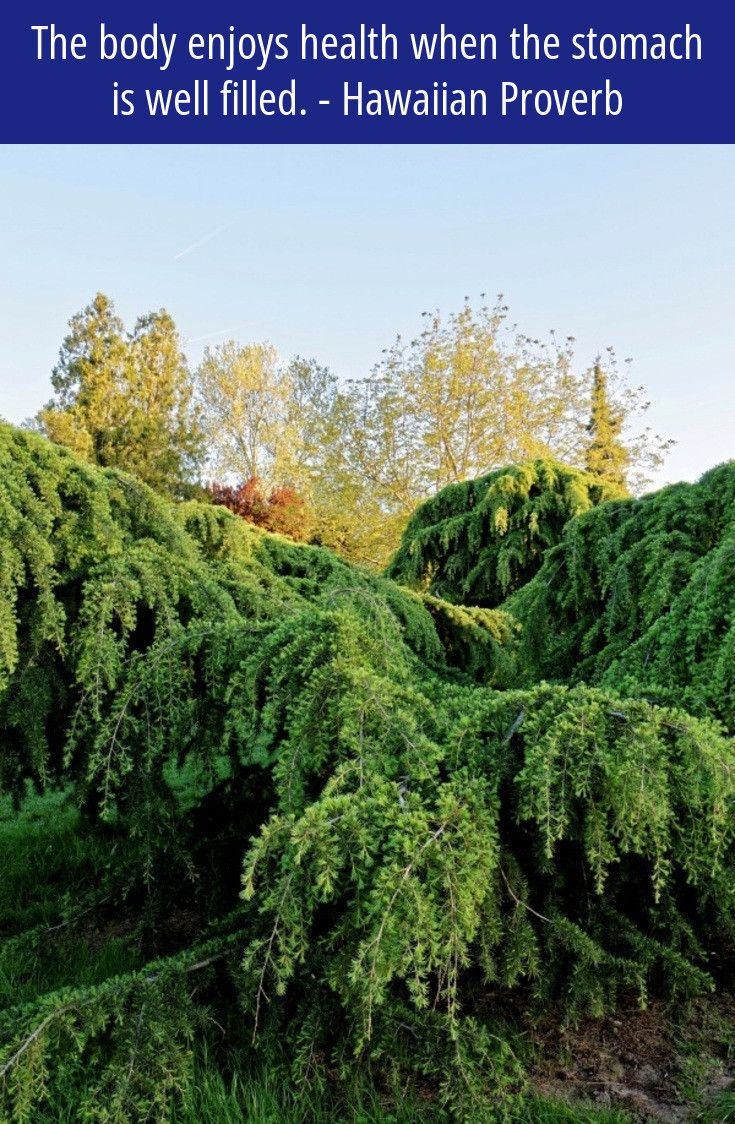 #gardening Clipart Zone 4 #gardening Plants, Formal Garden Osrs, Gardening  Competitions Uk 2017 Football, Kingfisher Gardening Pressure Sprayer U2026