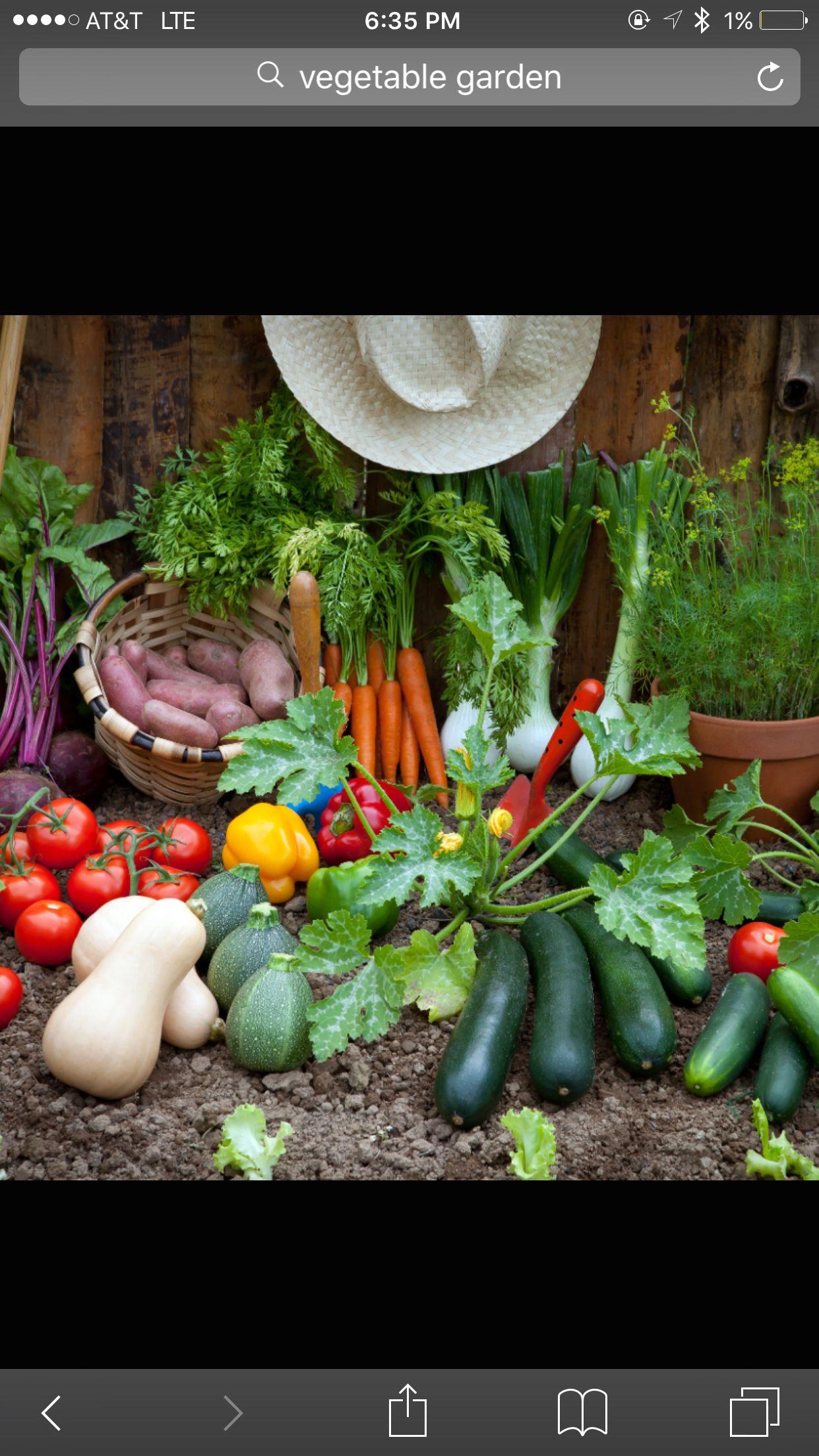 Grow your own growing vegetables growing food indoor