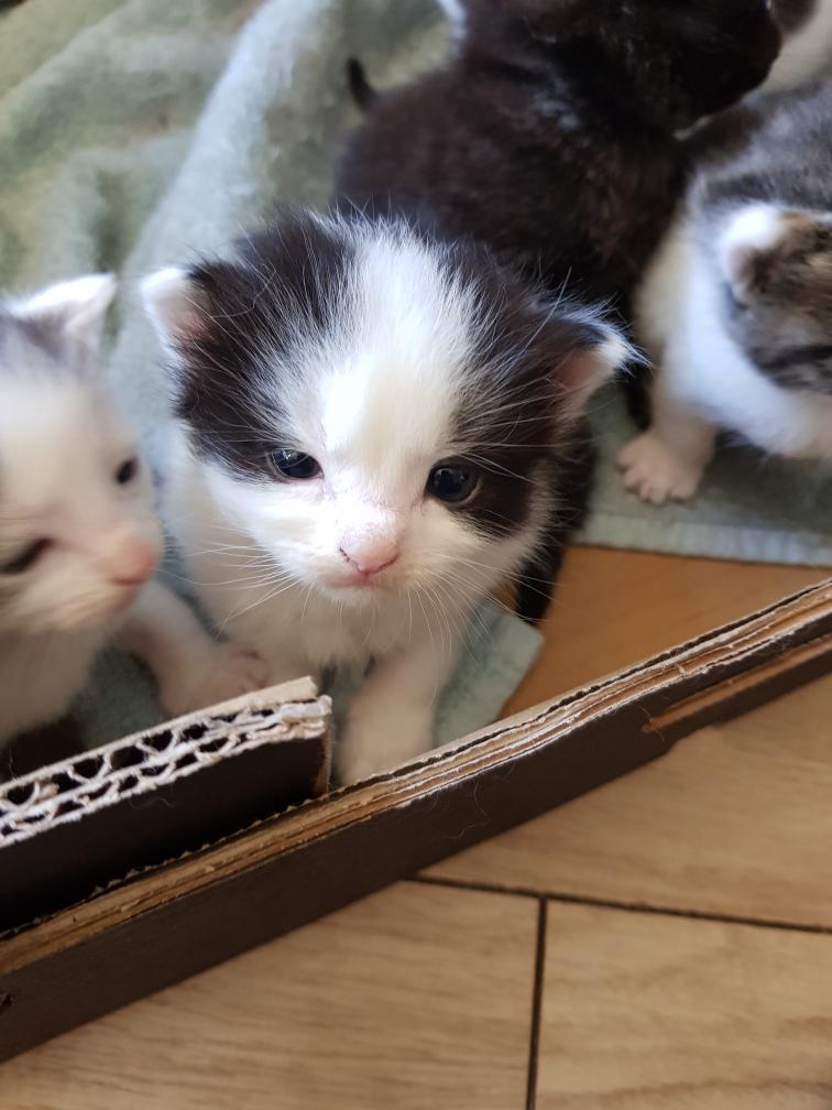 Meet My Baby Momo Tiny Kitten Cute Animals Kittens
