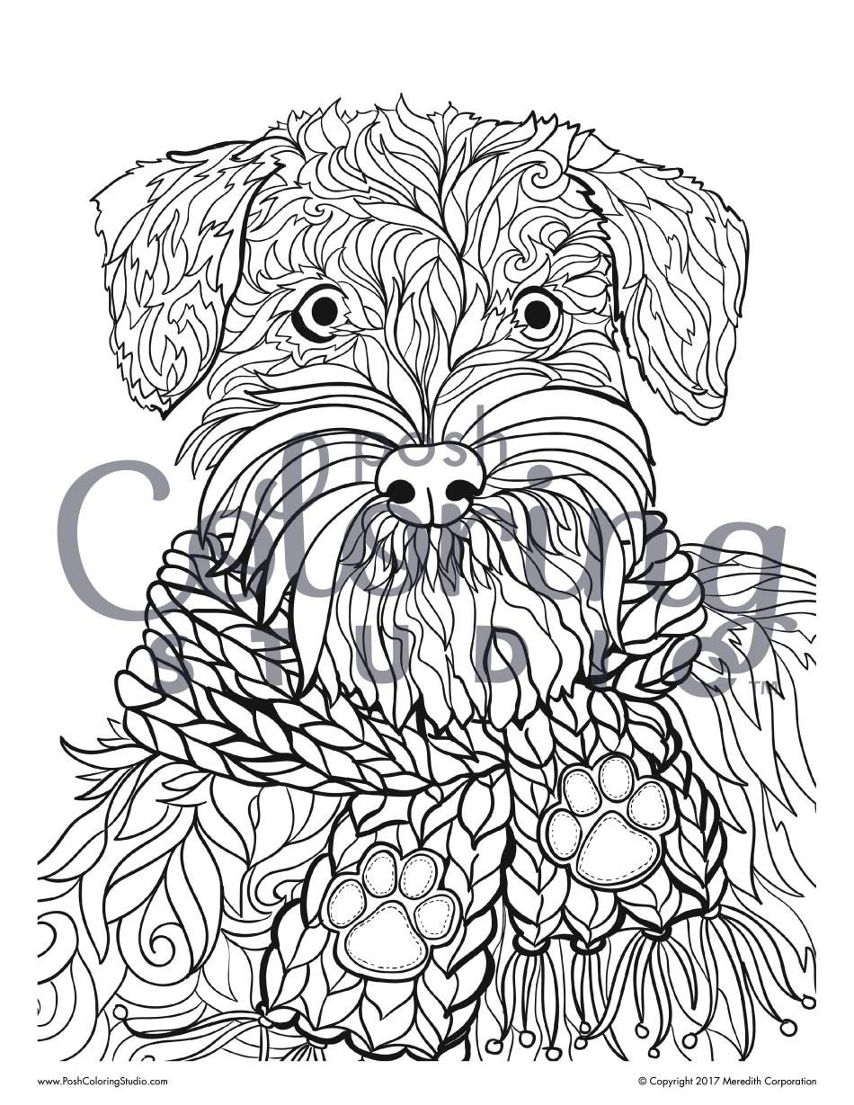 dog coloring page schnauzer in a scarf posh coloring studio
