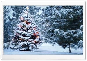 Beautiful Outdoor Christmas Tree Hd Wide Wallpaper For 4k Uhd Widescreen Desktop Smartph Christmas Desktop Wallpaper Outdoor Christmas Tree Christmas Desktop