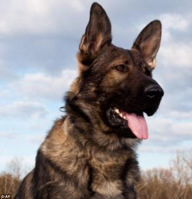 Memorial Service Planned For Rookie Fbi Dog Shot Dead By New York