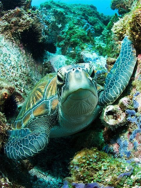 In your face sea turtle